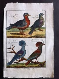 Diderot C1790 Hand Col Bird Print. Crowned Pigeon, Pigeons 76